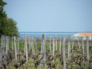 Vineyards on the Ile de Ré