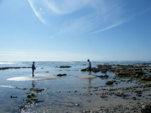 Rockpooling on the Ile de Ré